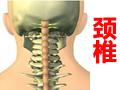 保护颈椎 (335播放)